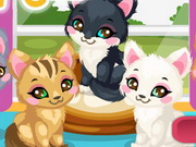 Kitty Care 2