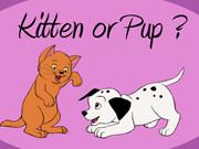 Kitten Or Pup