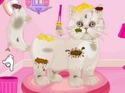 Persian Cat Princess Spa Salon